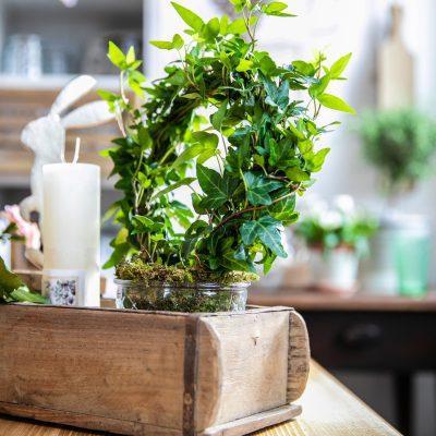 Dekoration Blumen und Pflanzen